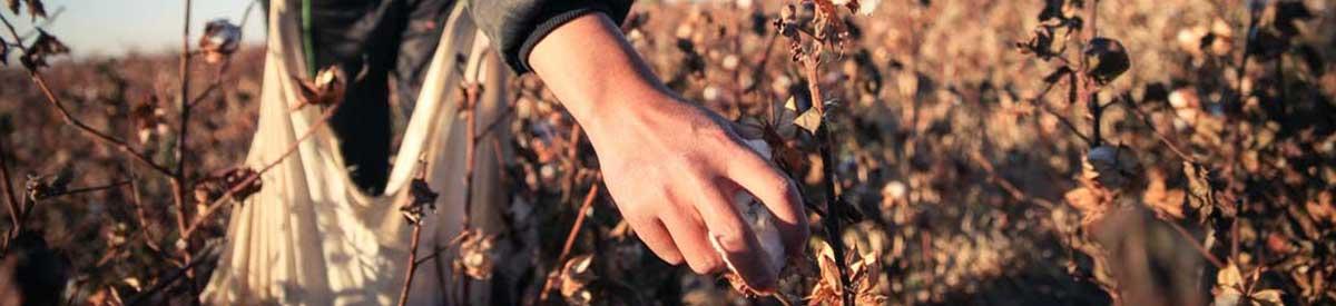 kontakt-banner-cotton-hand-picked