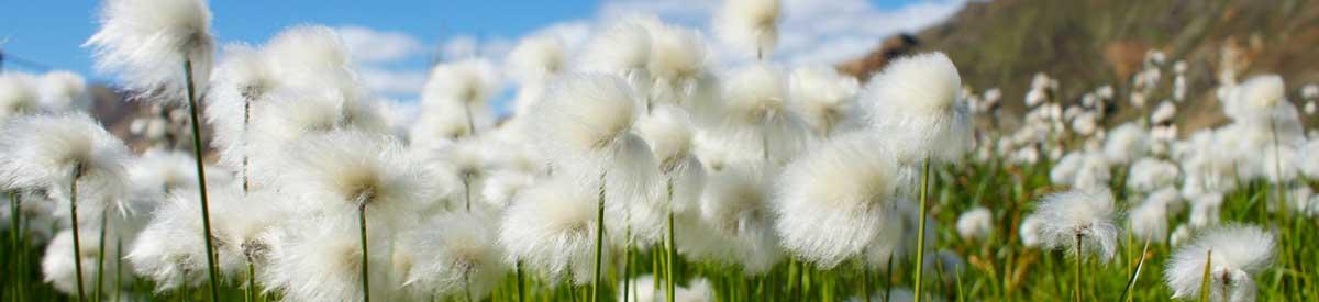ueber-uns-bottom-cotton